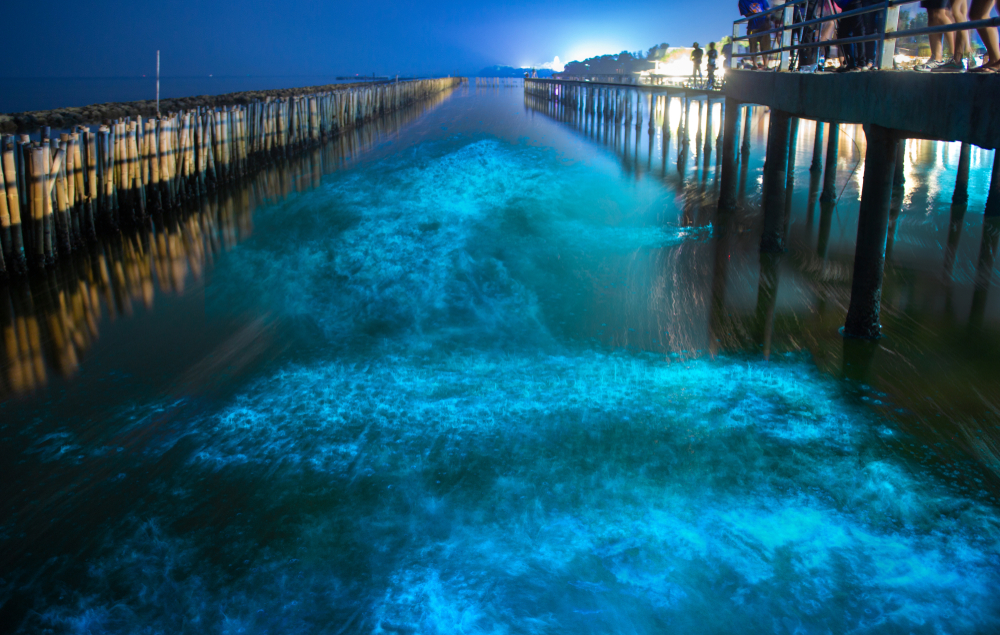 Bioluminescence Algae