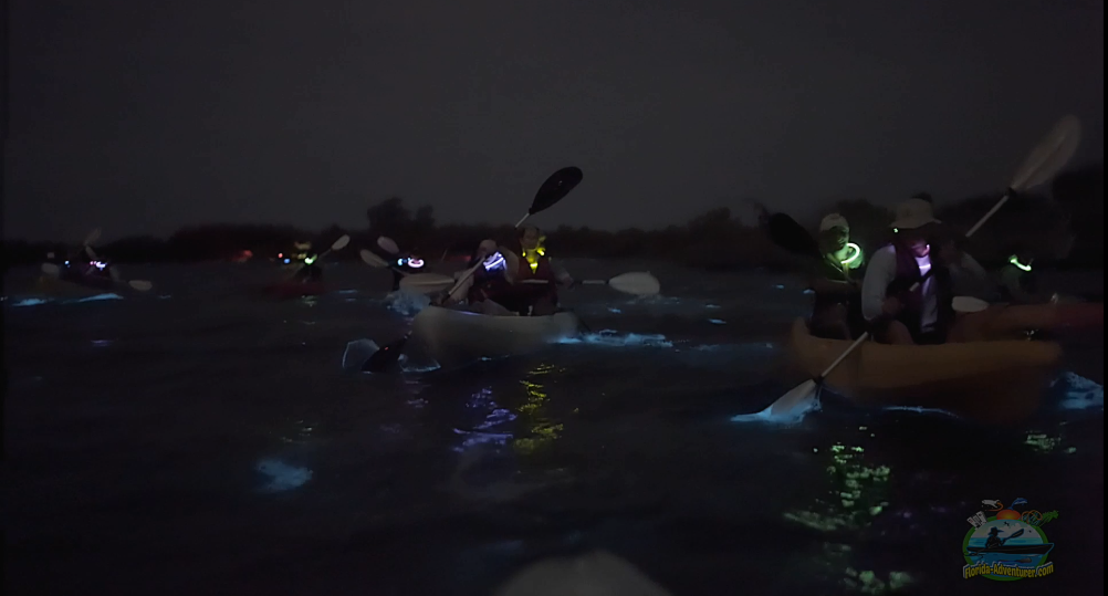 bioluminescence tour