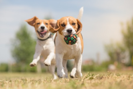 How Can I Protect My Pet From Heartworm Disease?
