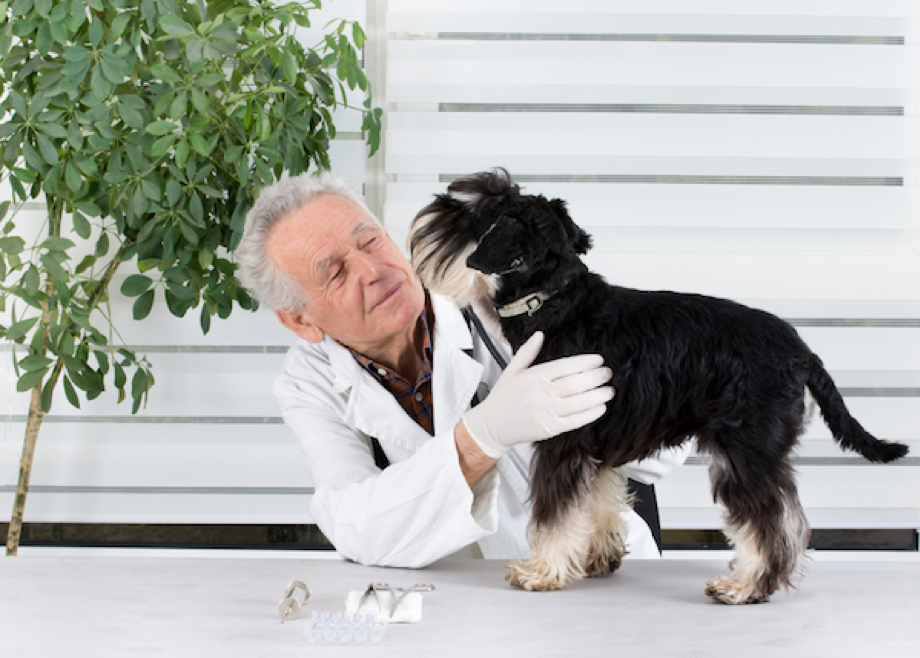 Pet Skin and Allergy Care