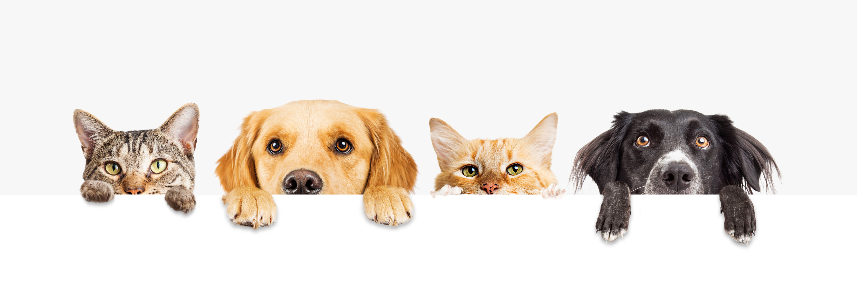 When Should I Take My Pet to the Vet for Allergies?
