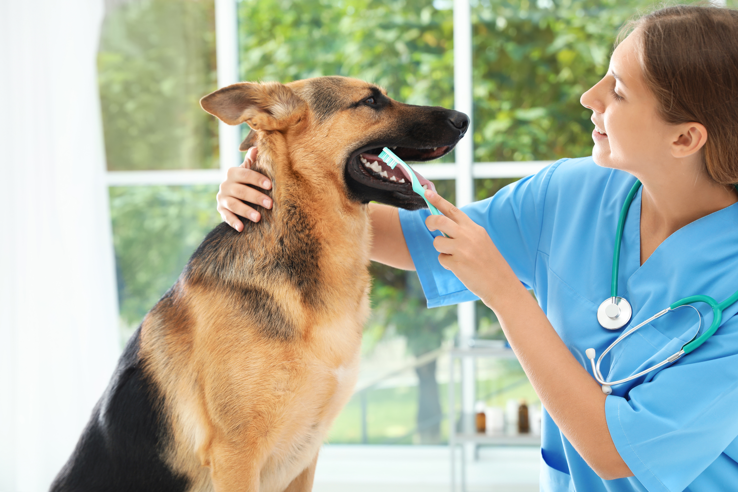 5 Facts You Need to Know to Protect Your Pets Oral Health
