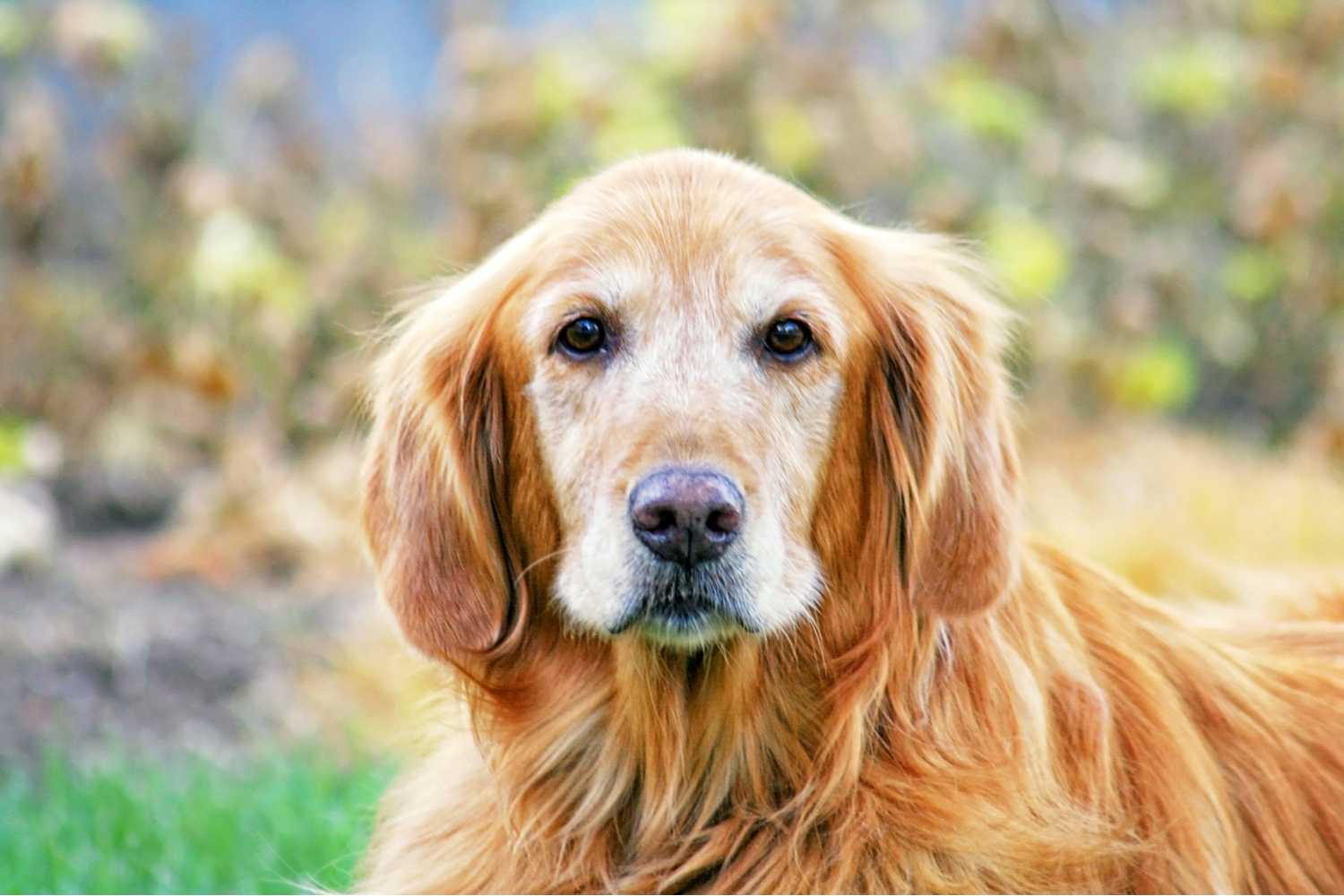 What's the importance of senior pet exams?