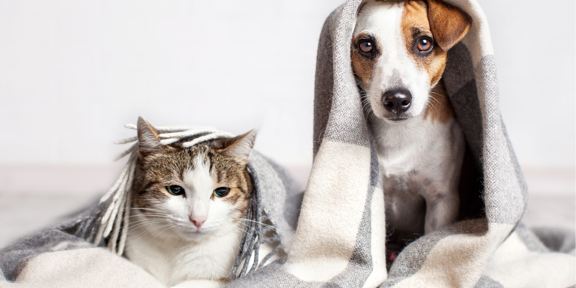 What Seasonal Changes Mean for Your Pets