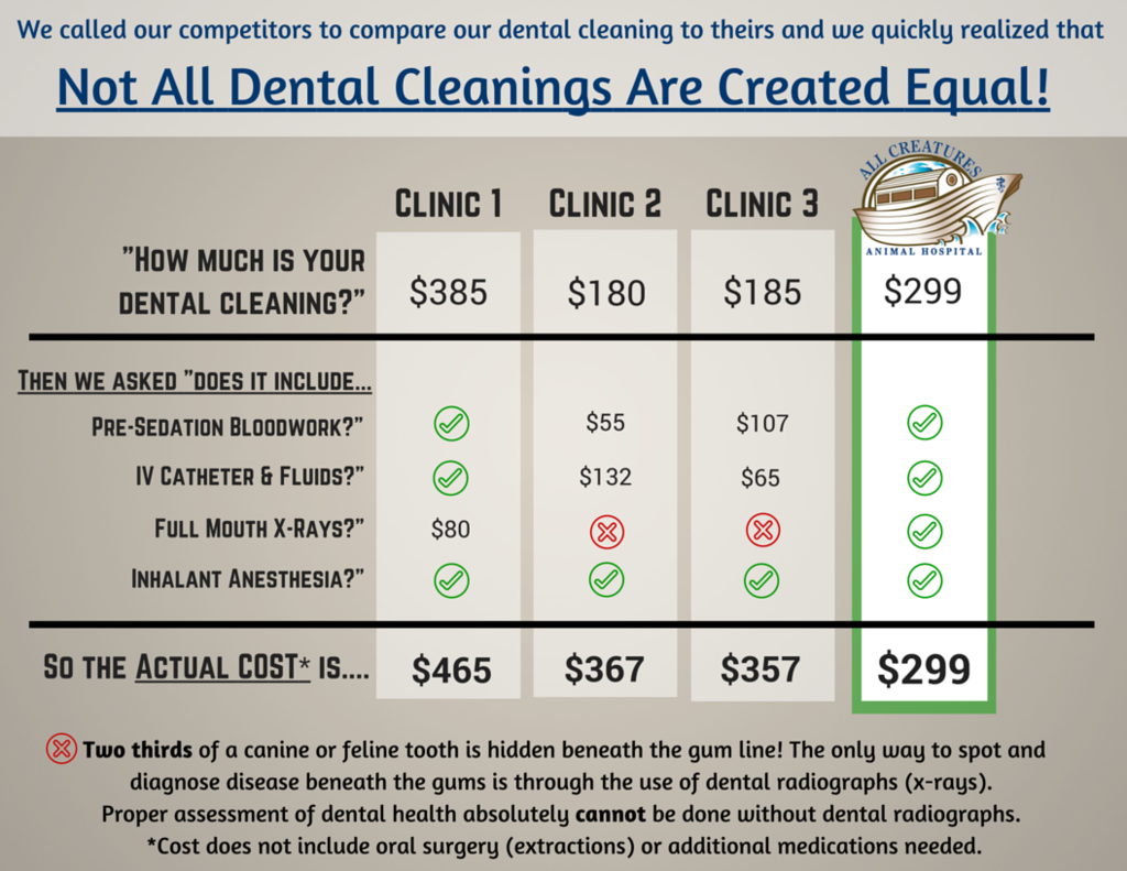 pet dental cleaning cost