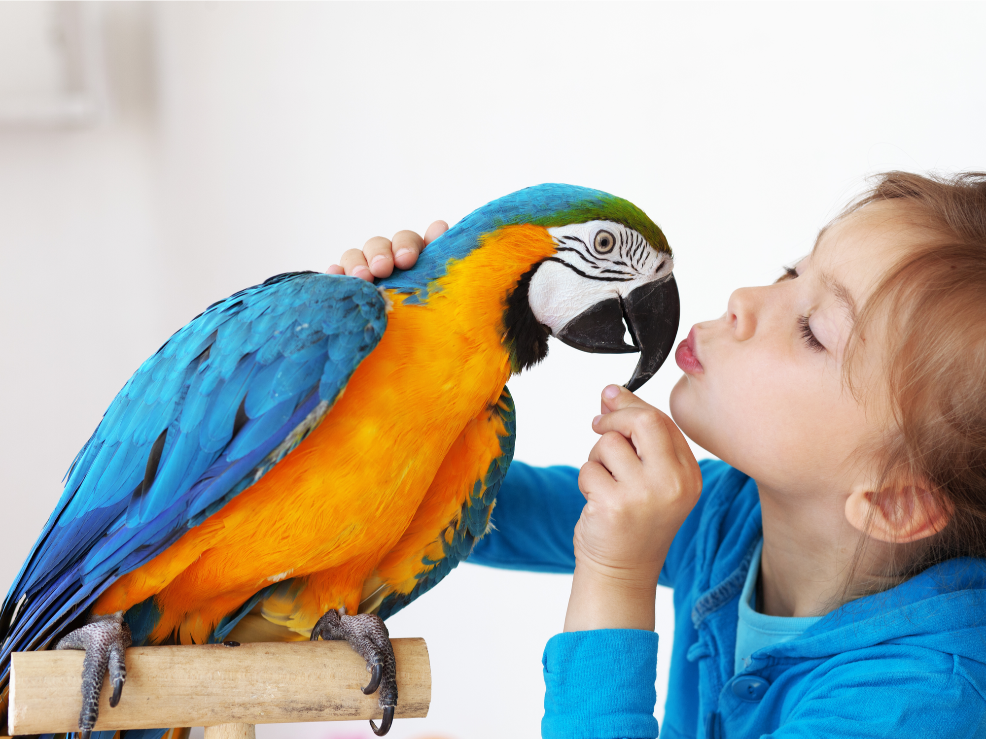 What to Know Before Buying an Exotic Pet