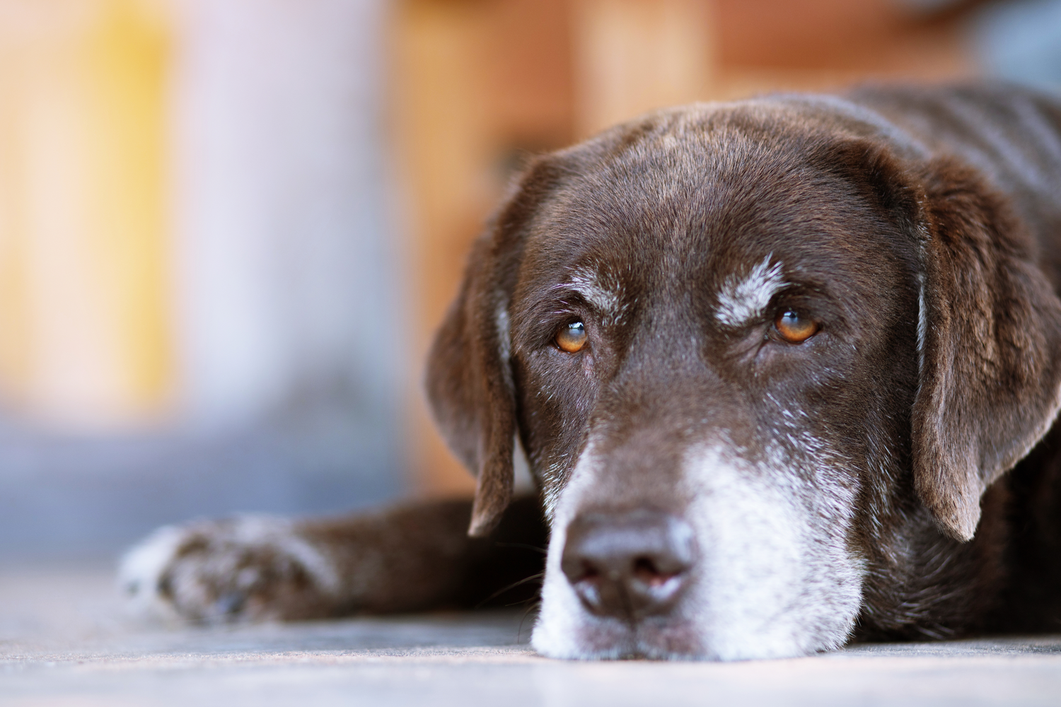Importance of Senior Pet Exams