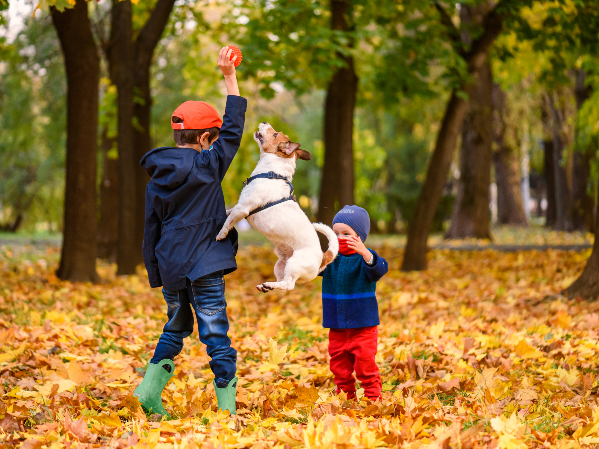 What to Look Out for This Fall: Pet Safety Tips