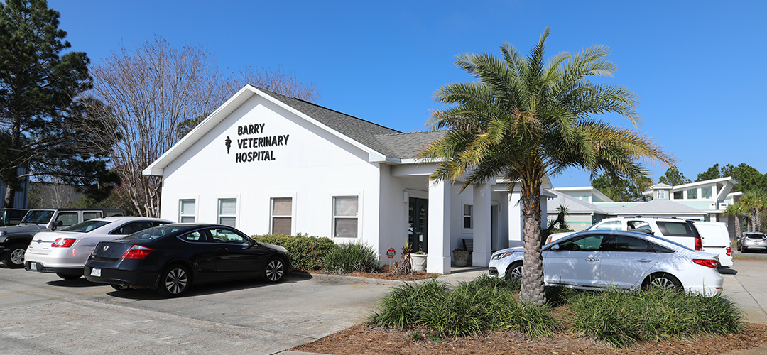 Barry Veterinary Hospital, Miramar Beach, FL vet