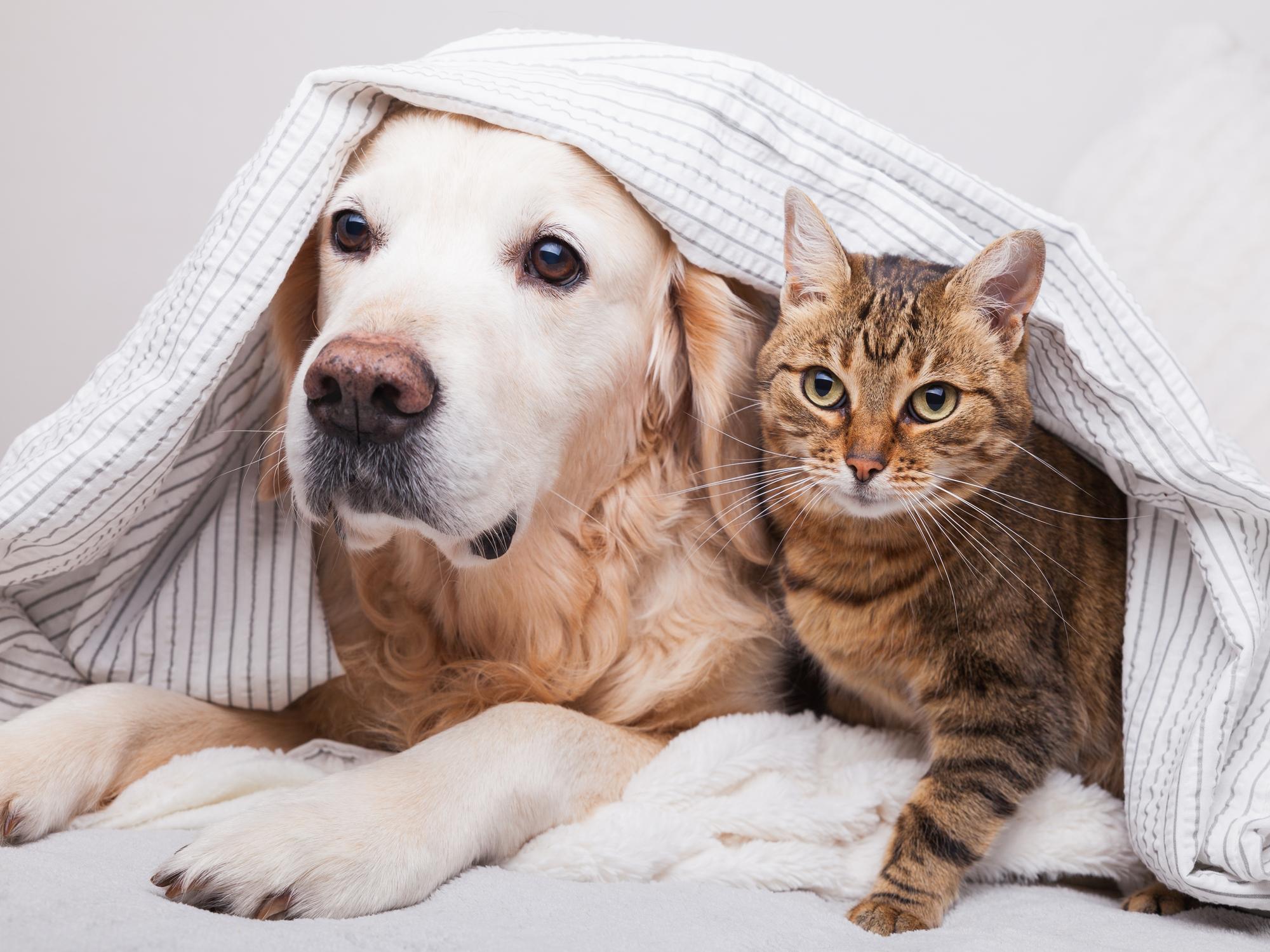 How To Keep Your Pet Safe This Hurricane Season