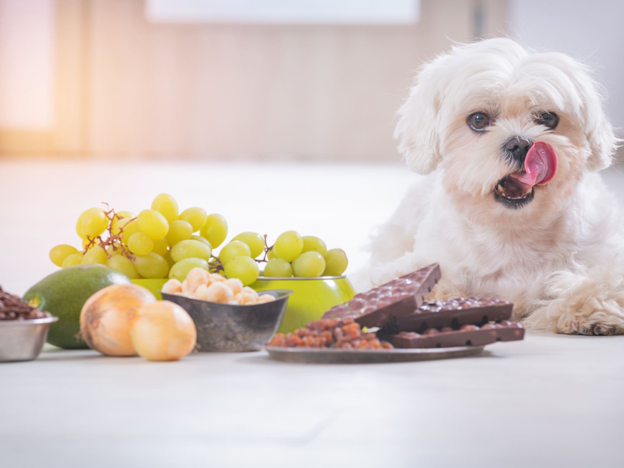Signs & Symptoms of Poisoning in Pets