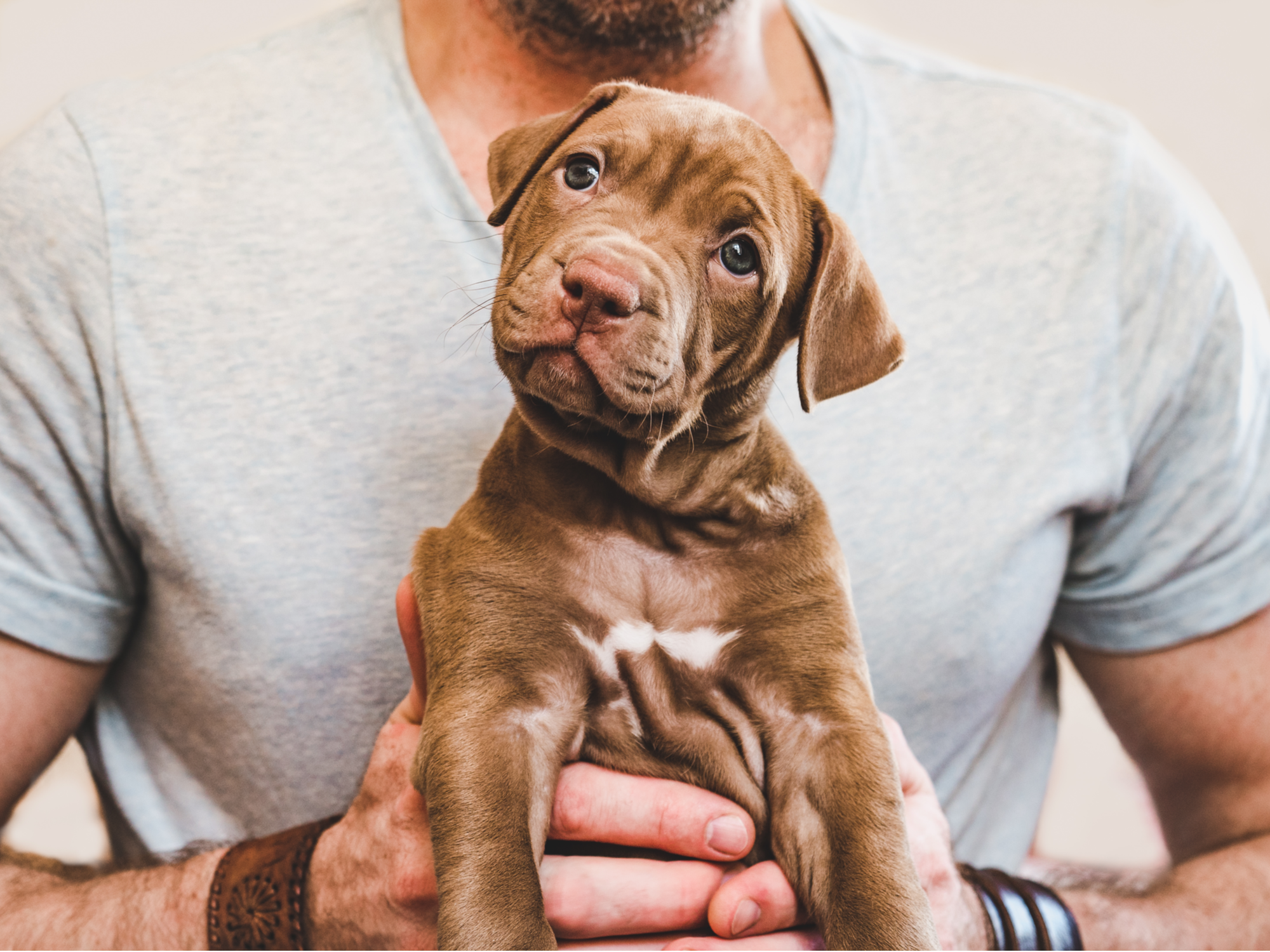 Bringing Home a New Puppy: How to Prepare