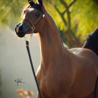 2019 Arabian Breeders World Cup