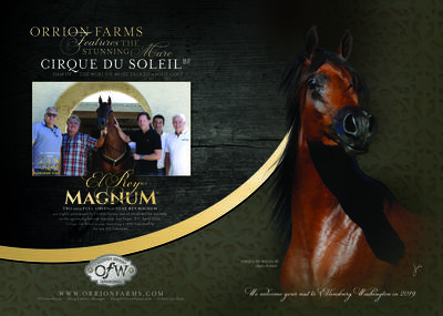 Featuring the stunning Cirque Du Soleil BF - Dam of El Rey Magnum
