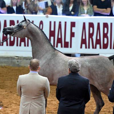 All 3 Judges agreed - Exxaltress - Unanimous US National Champion 2 Year-Old-Filly