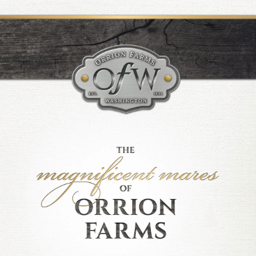 The Magnificent Mares of Orrion Farms