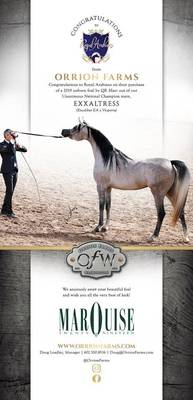 We congratulate Royal Arabians on their purchase of....
