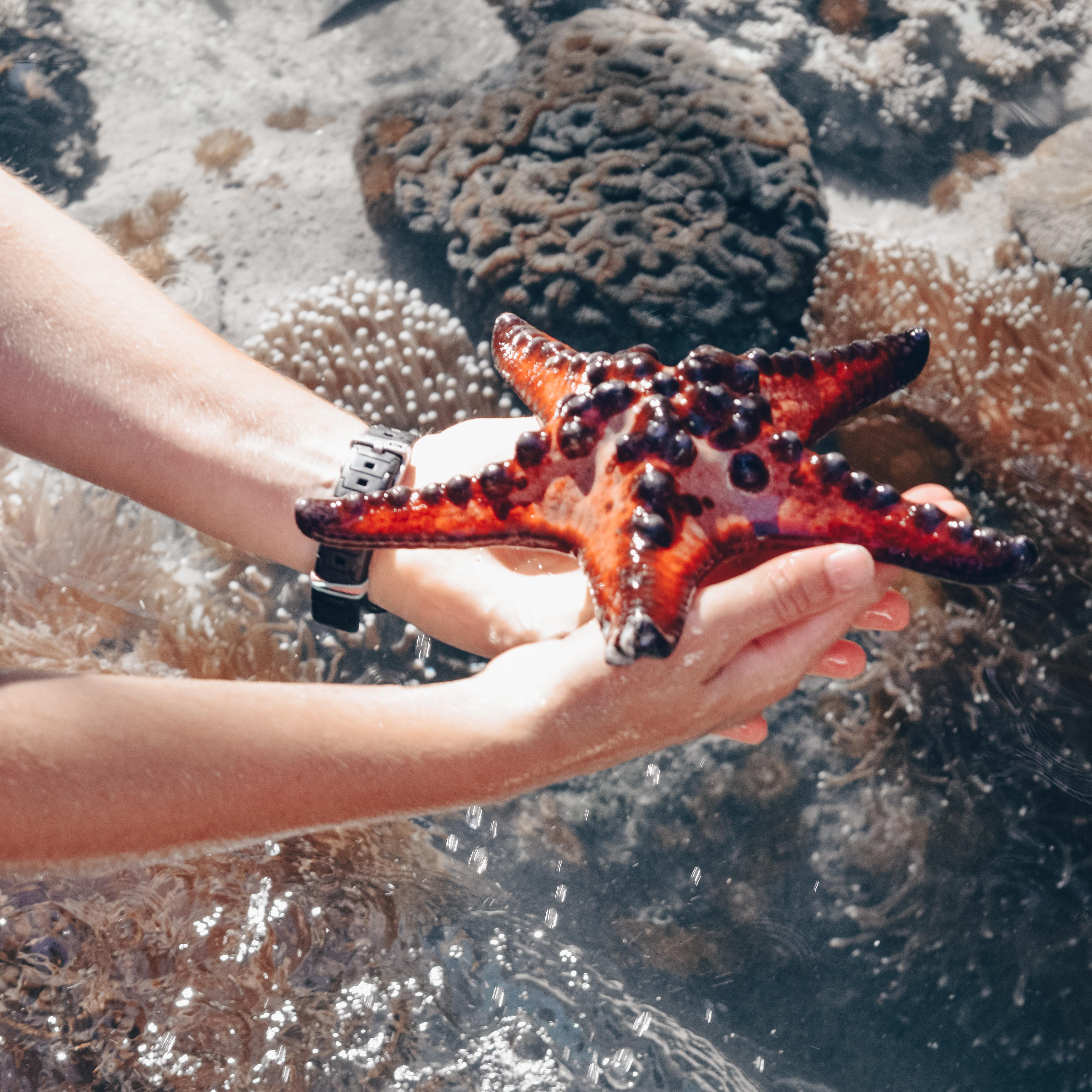 Hands holding a starfish to illustrate the South Carolina Aquarium