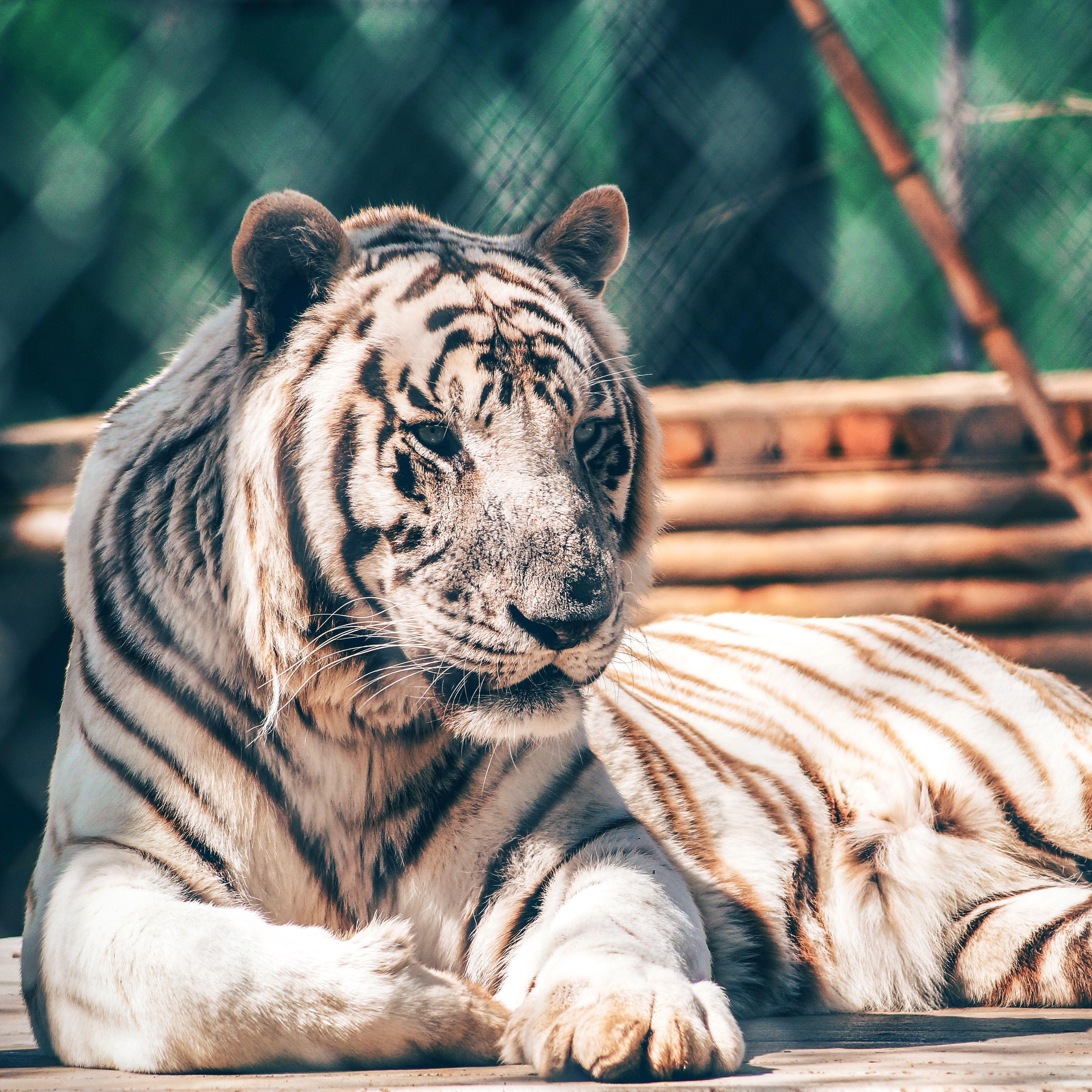 The zoos in the Carolinas are busy with educational offerings.