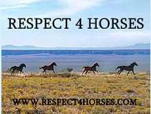 Respect4Horses
