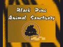 Black Pine Animal Sanctuary (PARC, Inc.)