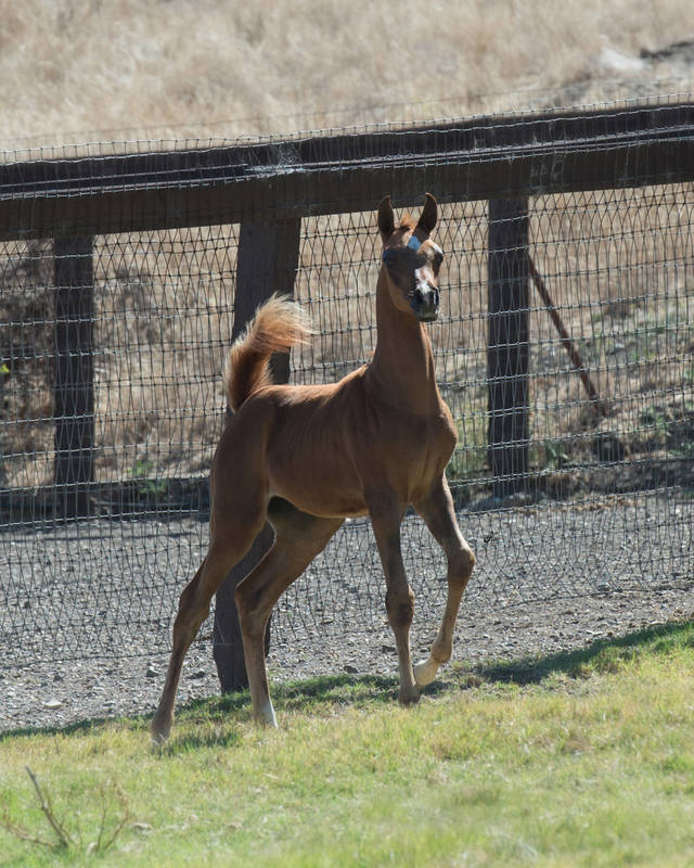 Cameaa as a weanling