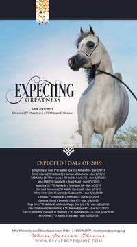 The Expected 2019 Foals