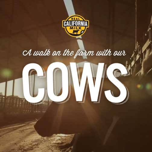cows milk and real california cheese Social media challenge: post a photo of a dairy product (cheese, yogurt, cottage cheese, butter, ice cream) showing the real california milk seal on facebook or.