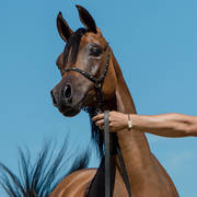 Region 15 Champion Yearling Filly - non sweepstakes.