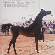 Dam of Arekka Rose - Regal Fada JP: Brazilian National Champion and Scottsdale Champion