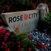 Random Rose City pics