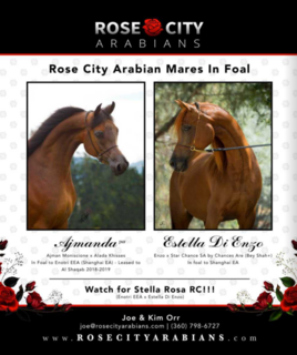 Rose City Mares in foal with FILLIES for 2019 :)