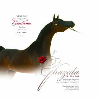 Ghazala El Jamaal - Awarded 'DAM OF EXCELLENCE'