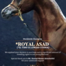 Royal Asad infused to the KSA