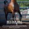 National Champion Sultan ORA now a part of Royal Arabians Show string!