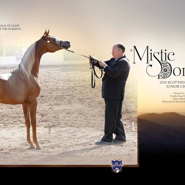 IBC of the Arabian Horse Times March Edition Vol. 50 No. 9
