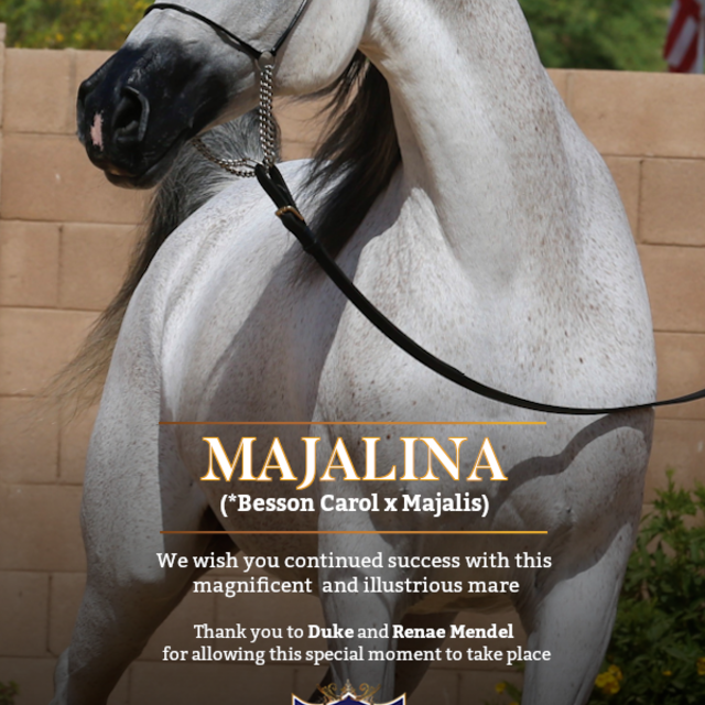 A legendary mare embarks on a new chapter to develop future greatness!