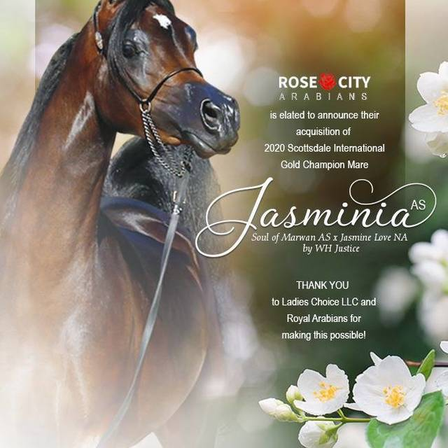 Jasminia AS now belongs to Rose City Arabians