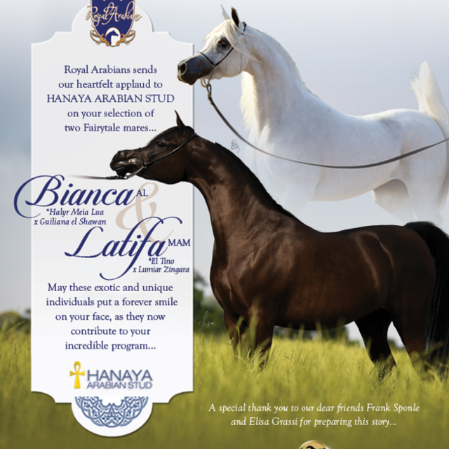 For Hanaya Arabian Stud only the best will do!