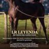 LR Leyenda to Al Nawal Stud for Arabian Horses
