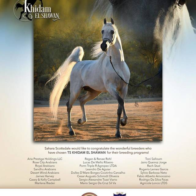Want Success, use *TS Khidam el Shawan like so many other great breeders have done!
