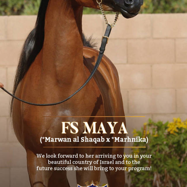 To Israel with love, we send you FS Maya!