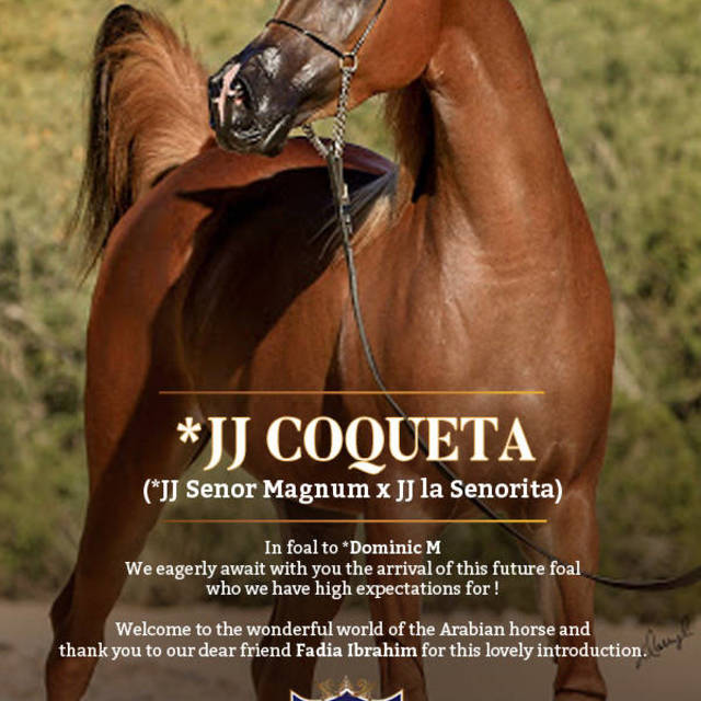 *JJ Coquetta, a story to be told and a story it will be!