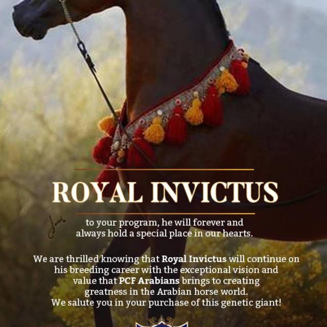 PCF Arabians brings Royal Invictus to their amazing program!