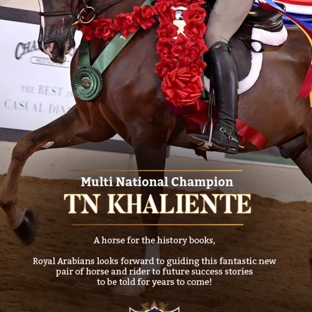 Texie Lowery,  you are in for something extra special with TN Khaliente!