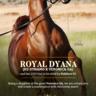 Royal Dyana to PCF Arabians!