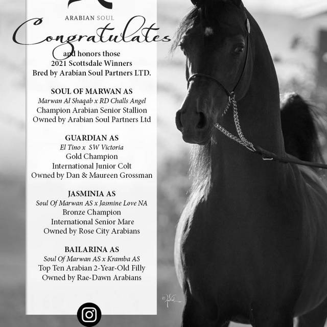 Arabian Soul Partners, STRENGTH and POWER at the 2021 Scottsdale Arabian Horse Show!