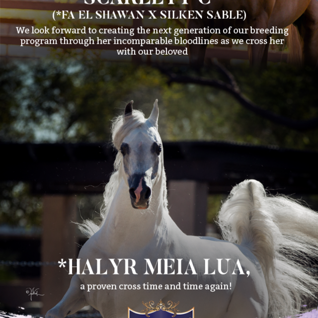 Royal Arabians is very excited!