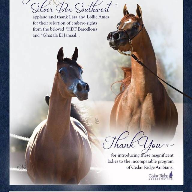 Congratulations to Cedar Ridge Arabians, Lara and Lollie Ames!