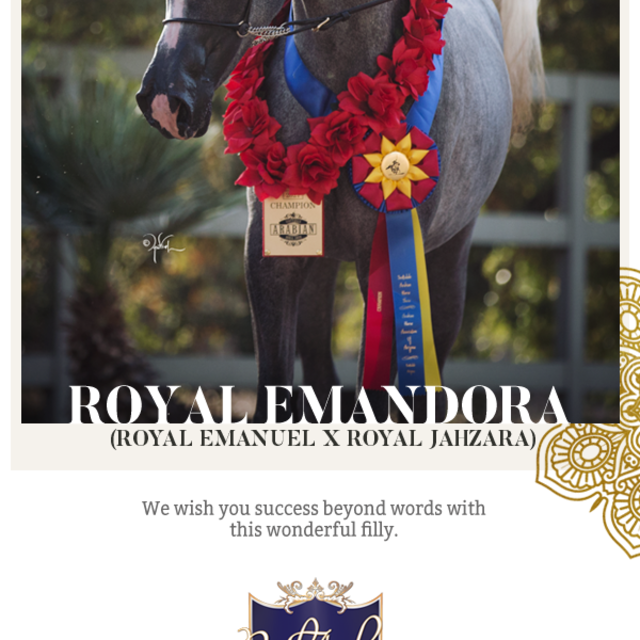 Congratulations Star Arabians, LLC on your most lovely acquisition!